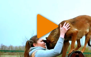 Видео «Его купила девушка на птичке»