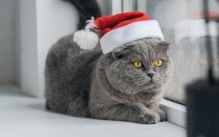 «Новогоднее чудо» или Как нас судьба свела