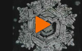 Флеш-ролик «Тайны Живой Воды»