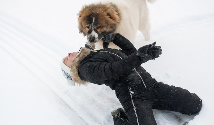Курьезные истории владельца собаки. Минутка позитива