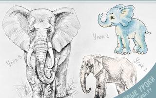Рисуем слоника карандашом легко и просто