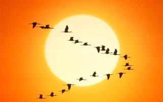 Уроки от гусей