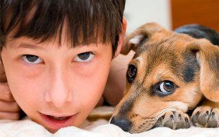 Как легко упросить родителей купить собаку