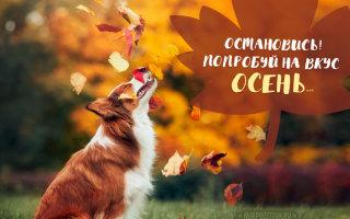 Список дел, которые сделают эту осень волшебной