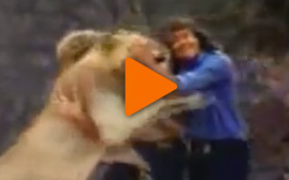 Видео «Лев, по имени Христиан!»