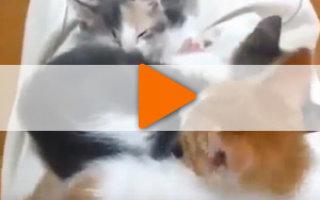 Забавные ролики про котят