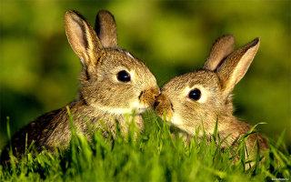 Фото «Животные поцелуйчики»