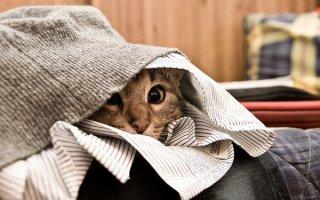 Коты-невидимки… Какие же они все-таки смешные! (45 фото)