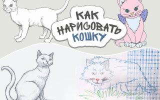 Как легко и красиво нарисовать кошку карандашом: инструкция для начинающих