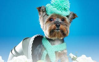 «Собачка в синей шапочке = скандал?» Юмор в стихах