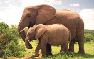 Притча «Слоны»