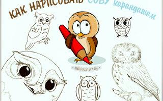 Как простым карандашом нарисовать мудрую сову