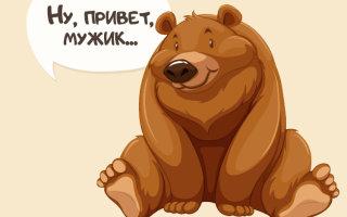 Рассказ дня «Как ученый повстречал медведя в лесу»