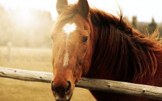 Фотографии и картинки лошадей, наполненные силой и грацией