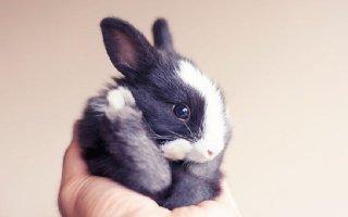 Милые и пушистые комочки счастья — Кролики