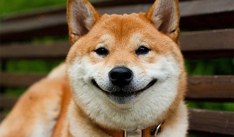 «Собаки-улыбаки» (20 фото). Жизнь любит тех, кто ей улыбается!