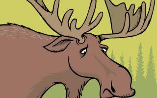 Занимательно и познавательно о животных (15 гифок)