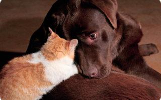 Собака – герой. Реальная история щенка и кошки