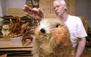 Животные из древесной стружки (фото)