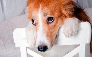 Семь историй о том, что животные могут быть умнее, чем их владельцы