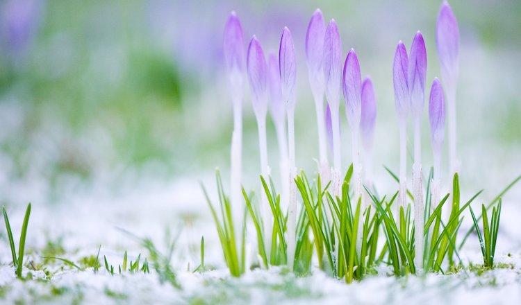 Прекрасные картинки про чудесную весну