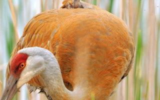 Трогательная забота в мире птиц (37 фото)