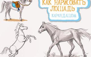 Как простым карандашом нарисовать с ребенком лошадь