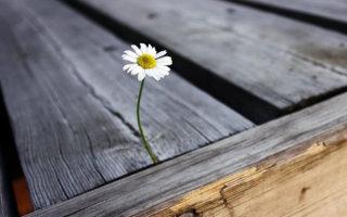 «Вот на что способно маленькое зернышко!» 23 интересных фото