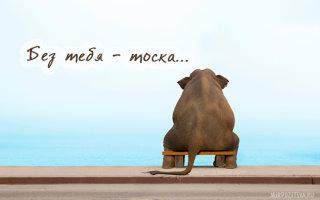 Подборка милых картинок «Скучаю по тебе»