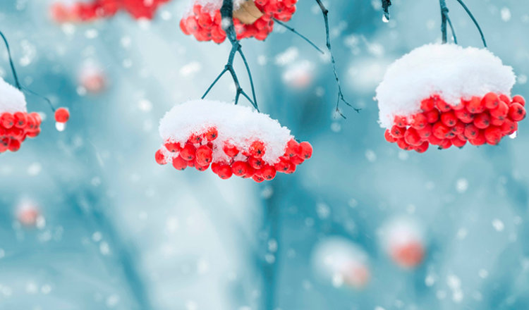 Волшебные картинки, которые поднимут настроение зимой