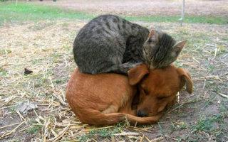 Удивительные истории о дружбе животных. Фото