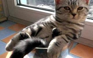 Кошки – это пушистая жидкость, есть доказательства! (25 смешных фото)
