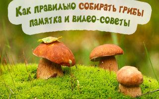 Как нужно собирать грибы правильно и с удовольствием: полезные советы