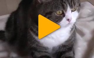 Видео «Один день из жизни кота»