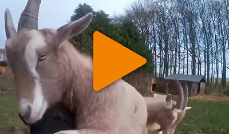Видео «Животные обнимашки»