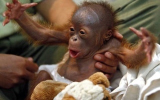 Фото «Животный позитив!»