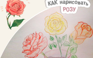 Простые способы, которые откроют секрет, как рисовать цветок розы