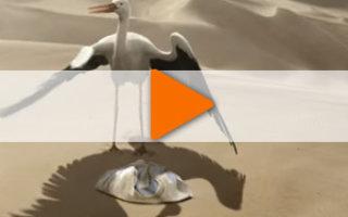 Видео «История одного аиста»