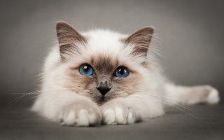 Лучшая подборка фото красивых и смешных кошек