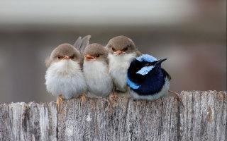 Эти птицы согреют, когда придут холода (15 трогательных фото)