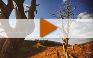 Видео «Научи меня искусству маленьких шагов»