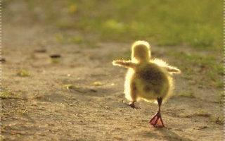 2 мудрые притчи: Про перспективу и Веру в свои силы