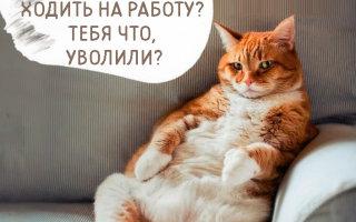 Смешные фото «Как коты переживают самоизоляцию хозяев»