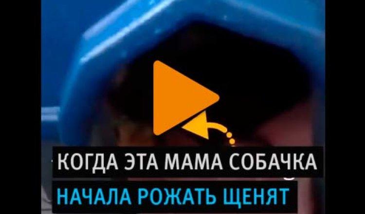 Видео «Будка-роддом»