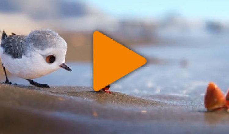 Видео «Как птенец победил свой страх»