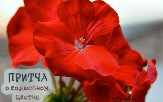 Притча «Волшебный цветок»