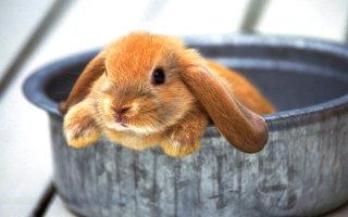 Фото «Кроликотерапия»