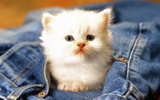Притча «Котенок!»