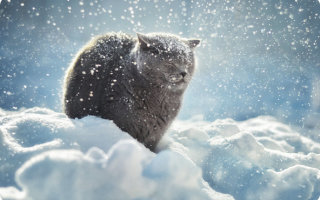 Зимняя хандра и как с ней бороться