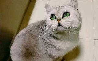 Хозяев кошки забрали в больницу. Когда они вернулись после эпидемии домой, их ждал сюрприз